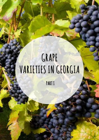 Grape Varieties in Georgia
